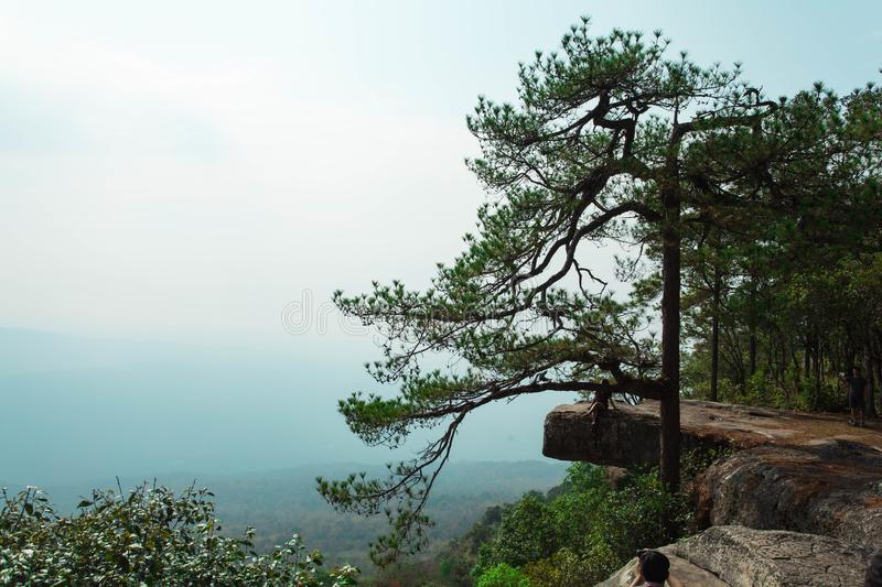 A wide stone terrace and a pine tree close up along the cliff near the ledge. A wide stone terrace and a pine tree close up along the cliff near the ledge stock images