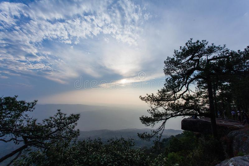 A wide stone terrace and a pine tree close up along the cliff near the ledge. Jutting out into the air to the south. Pha Lom Sak is a view of the mountains royalty free stock image