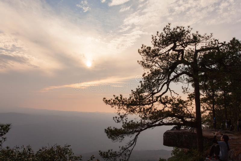 A wide stone terrace and a pine tree close up along the cliff near the ledge. Jutting out into the air to the south. Pha Lom Sak is a view of the mountains stock photos