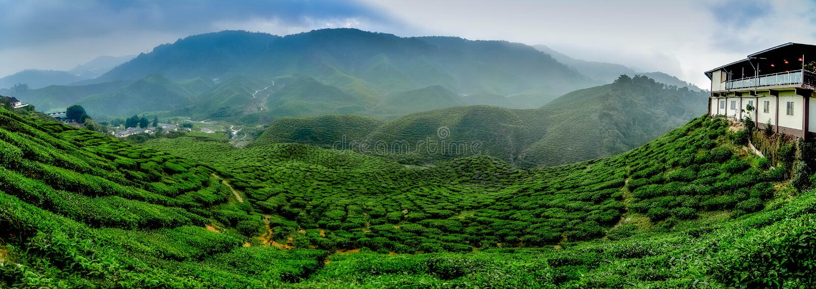 Wide view the beautiful tea plantation at Cameron Highland, Malaysia. Hill curve and slope with fog, cloudy sky royalty free stock photo
