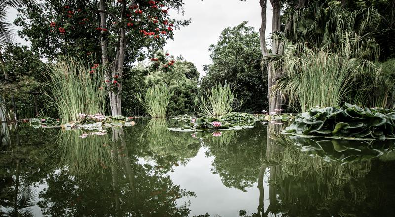 Wide view over a beautiful pond with water lilies. A wide view over a beautiful pond with water lilies royalty free stock photography