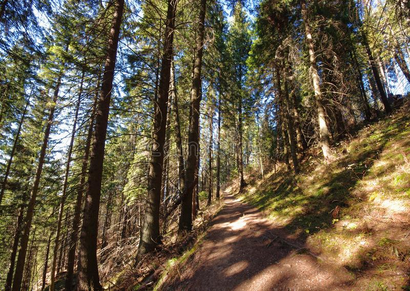 Wide view of path royalty free stock images