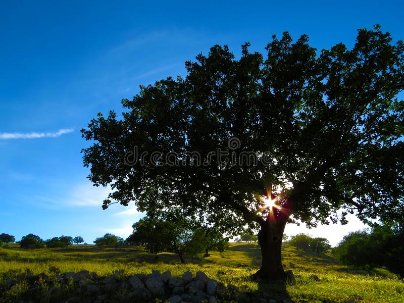 Wide View Tree And Green Grass During Daytime Free Public Domain Cc0 Image