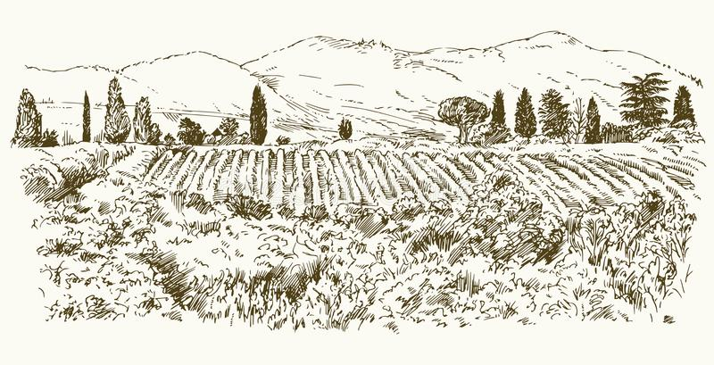 Wide view of vineyard. Vineyard landscape panorama. Hand drawn illustration stock illustration