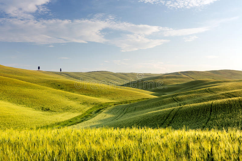 Download Wide views of Tuscany stock image. Image of countryside - 25154105