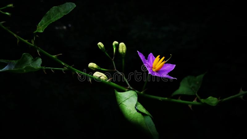 Widesh stående av en blomma, med banan fyra royaltyfri fotografi