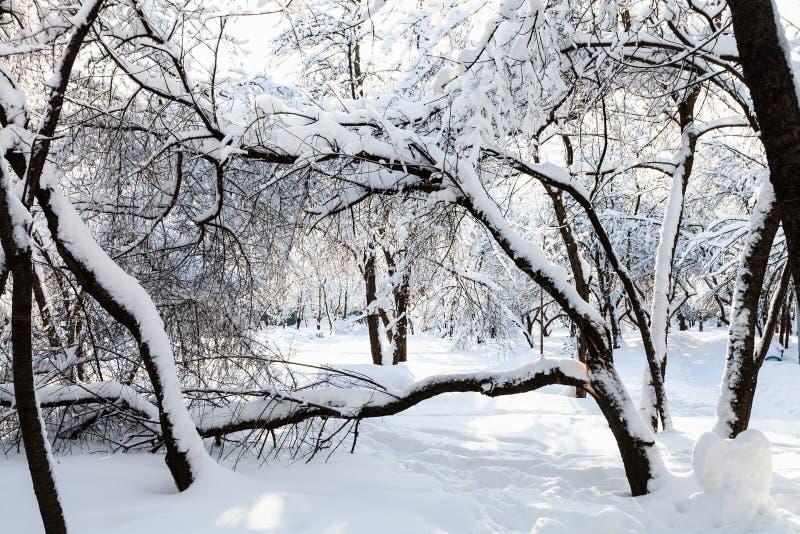 widok śnieżysty ogród w zima ranku fotografia royalty free