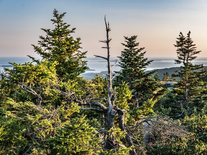 Widok Świerkowy las i francuz zatoka od szczytu Cadillac góra obraz royalty free