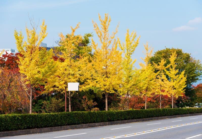 Widok żółci jesieni drzewa wzdłuż drogi, Kyoto, Japonia Odbitkowa przestrzeń dla teksta zdjęcia royalty free
