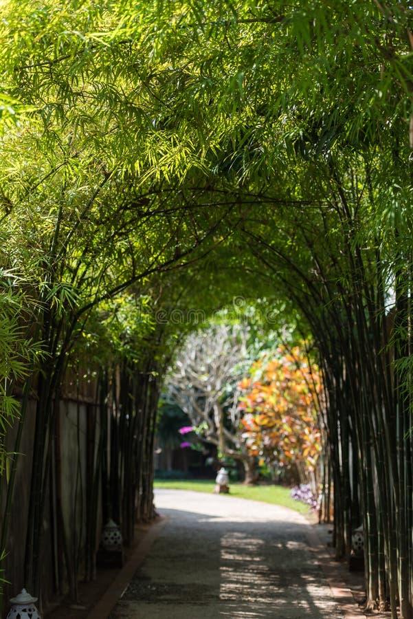 Widok bambusowa aleja w Louangphabang, Laos Odbitkowa przestrzeń dla teksta pionowo zdjęcie royalty free