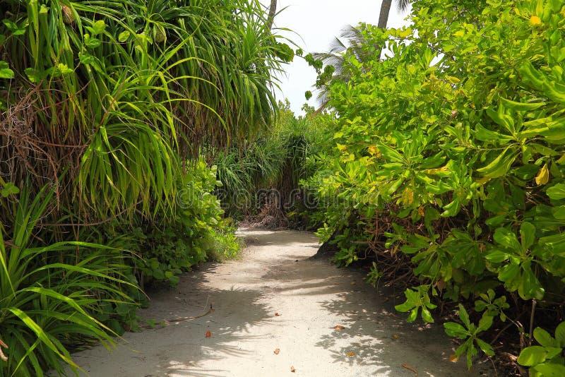 Widok biała piasek droga przemian w zielonej tropikalnej dżungli Zieleni drzewka palmowe i zielone rośliny na popielatym nieba tl zdjęcia stock