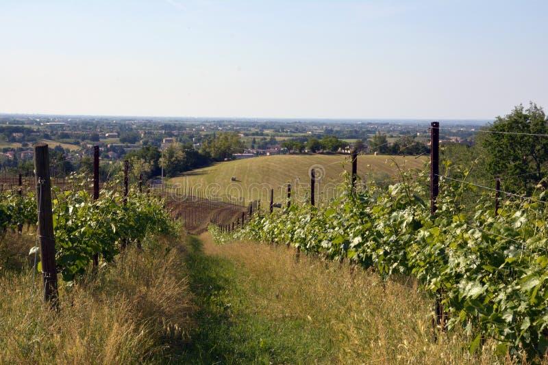 Widok część Reggio Emilia od winnicy zdjęcie royalty free