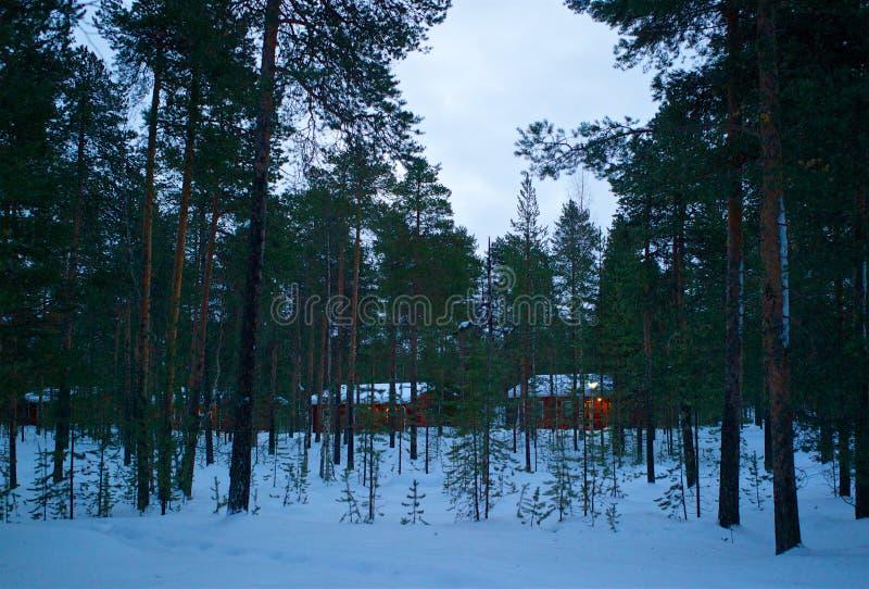 Widok czerwone chałupy za zielonymi sosnami w zimie zdjęcia royalty free