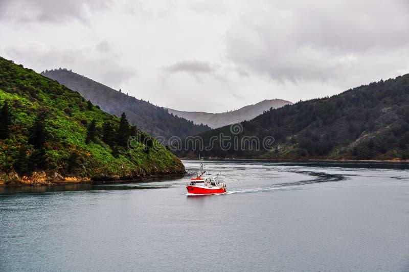 Widok dźwięki w królowej Charlotte drodze, Nowa Zelandia zdjęcie royalty free