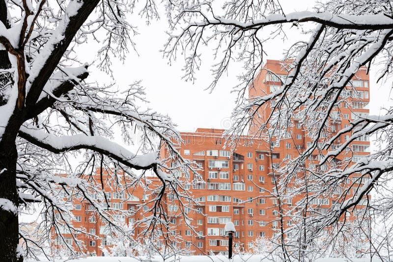 widok dom przez śnieżystych gałąź zdjęcie stock
