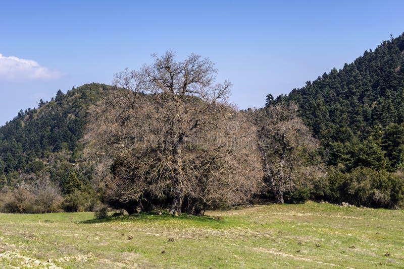 Widok drzewa, łąka i góry na wiosna dniu Grecja, Peloponnese zdjęcie royalty free