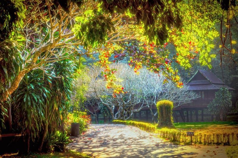 Widok drzewa wzdłuż sposobu fotografia royalty free