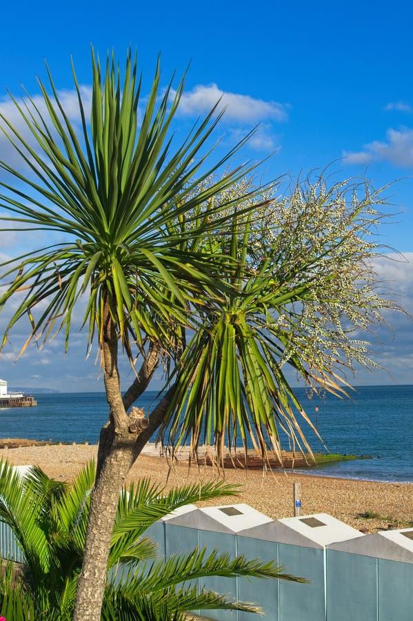 Widok drzewko palmowe, Kąpać się pudełka, plażę i morze, przeciw niebieskiemu niebu obrazy royalty free