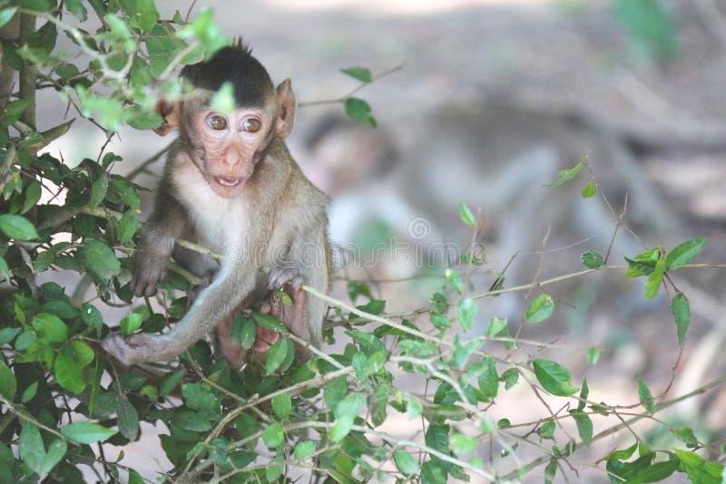 Widok dziecko małpa na drzewnym Tajlandia obraz royalty free