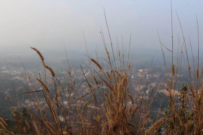 Widok formy wzgórza zestrzelają miasto przez wysuszonego w górę trawy Virajpet od Karnataka fotografia royalty free