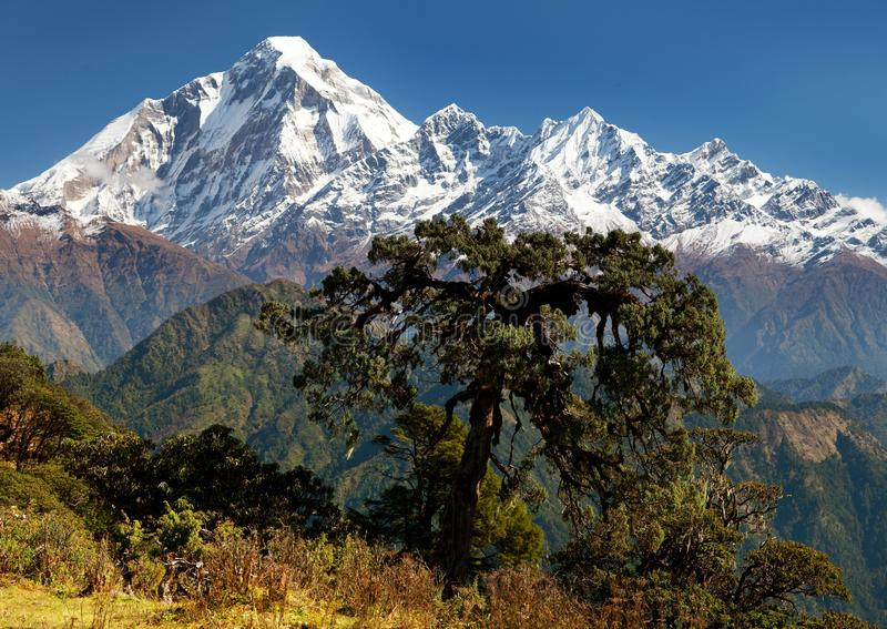 Widok góra Dhaulagiri zdjęcia stock