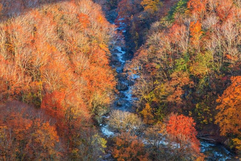Widok góra Jogakura wąwóz w jesień sezonie, Aomori, Japonia zdjęcie royalty free