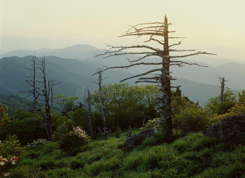 widok górski obrazy stock