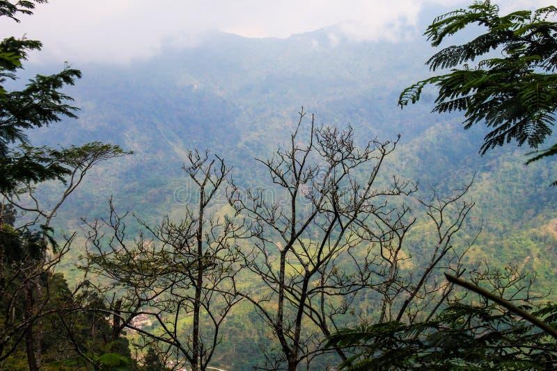 Widok górski z tyłu drzewa obrazy royalty free