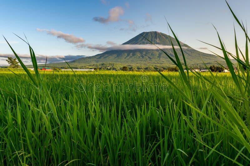 Widok góry Yotei obraz royalty free