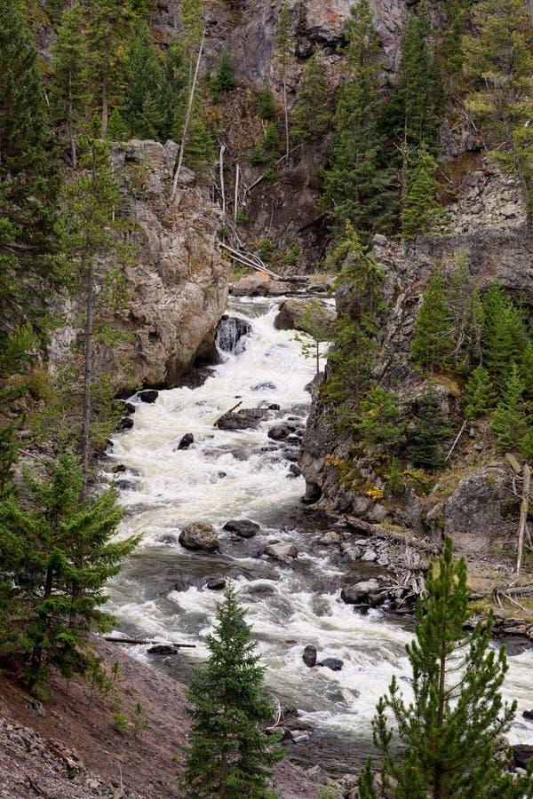 Widok Gibbon rzeka w Yellowstone parku narodowym fotografia stock