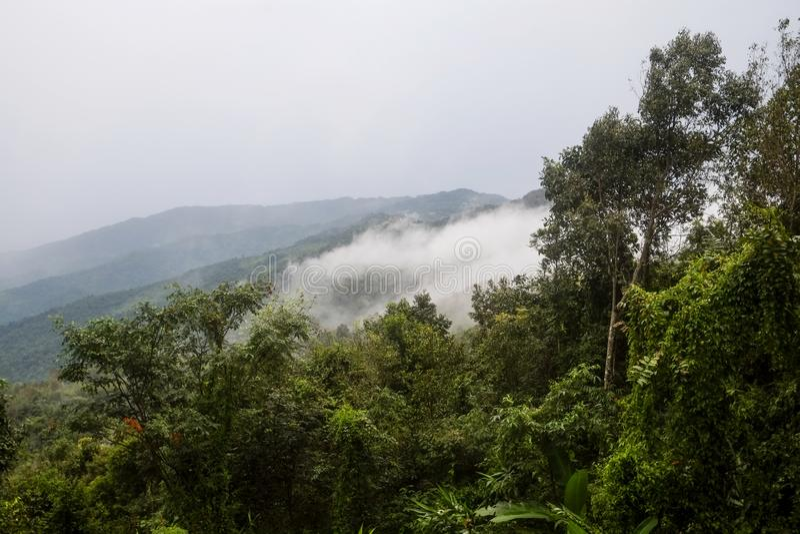 Widok halna warstwa z mgłą rozprzestrzenia nad tropikalnym lasem tropikalnym fotografia royalty free