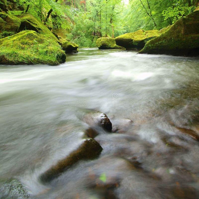 Widok halny strumień pod świeżymi zielonymi drzewami Poziom wody robi zielonym odbiciom gdy Claude końcówka pola haystacks monet  obrazy stock