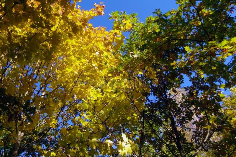Widok jaskrawi żółtej zieleni czerwoni drzewa w jesieni w lesie zdjęcia royalty free