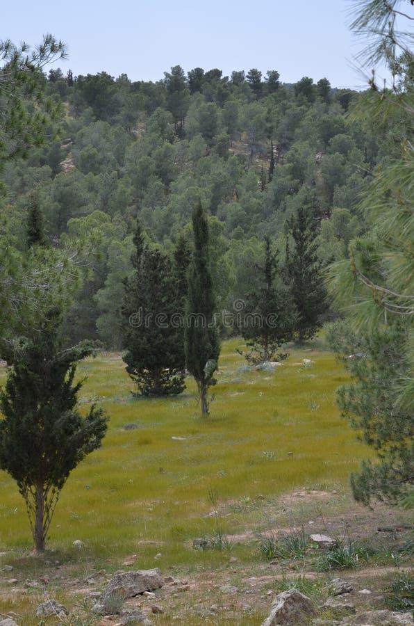 Widok Jerozolimskie góry zdjęcia stock