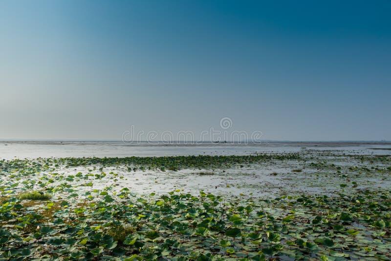 Widok jeziorna nonghan Sakon Nakhon prowincja, Tajlandia obraz royalty free