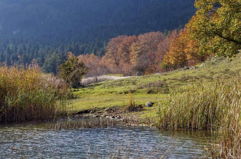 Widok jeziorny Doxa i drzewa z żółtymi liśćmi Grecja błękitni, czyści, halni, region Corinthia, Peloponnese na jesieni, zdjęcia stock