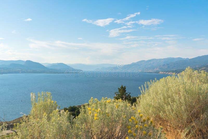 Widok jezioro, góry i niebieskie niebo w lecie z żółtymi kwiatami rabbitbrush w przedpolu, fotografia stock
