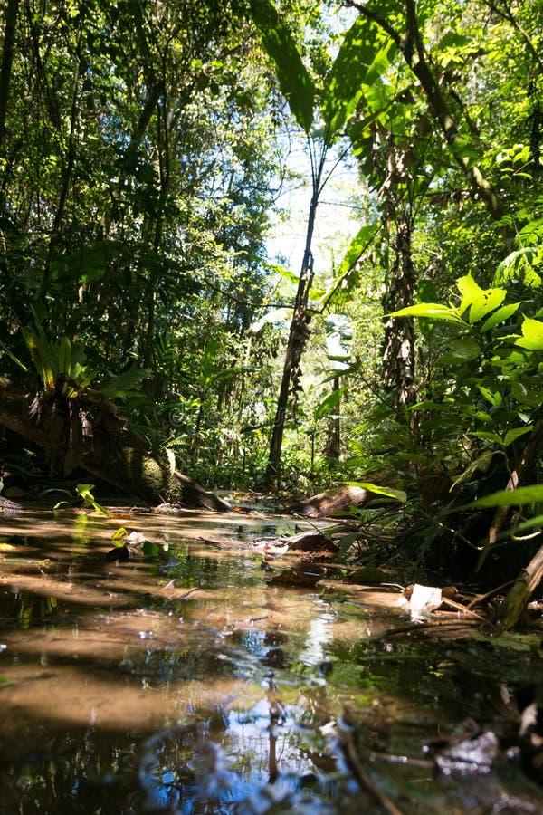 Widok jezioro w tropikalnym lesie deszczowym w Malaysia od żaby perspektywy zdjęcia stock