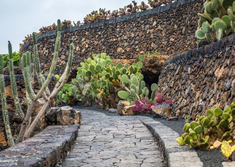 Widok kaktusa ogród, Lanzarote obrazy stock