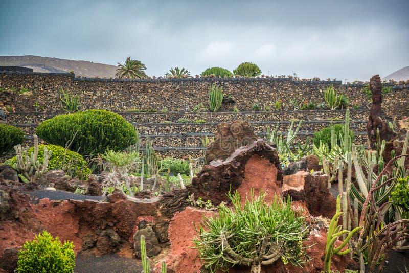 Widok kaktusa ogród, Lanzarote zdjęcia royalty free
