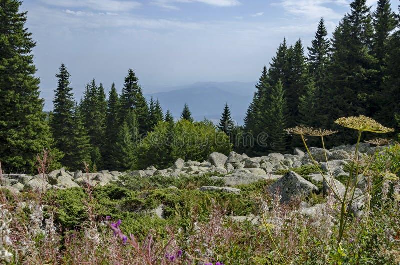 Widok kamienni rzeczni duzi granitów kamienie na skalistej rzece od odległości w Vitosha parka narodowego górze obrazy stock