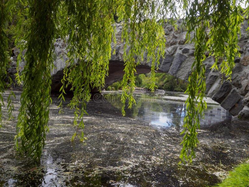Widok kamienny most nad wodą przez opaść gałąź w przedpolu obraz royalty free