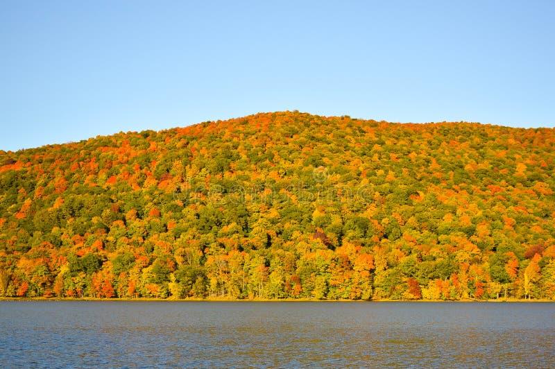 Widok kolorowi lasowi drzewa i jezioro w jesieni obrazy stock