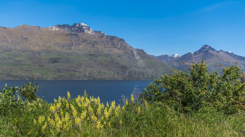 Widok krajobraz jeziorny Wakatipu, Queenstown, Nowa Zelandia fotografia stock