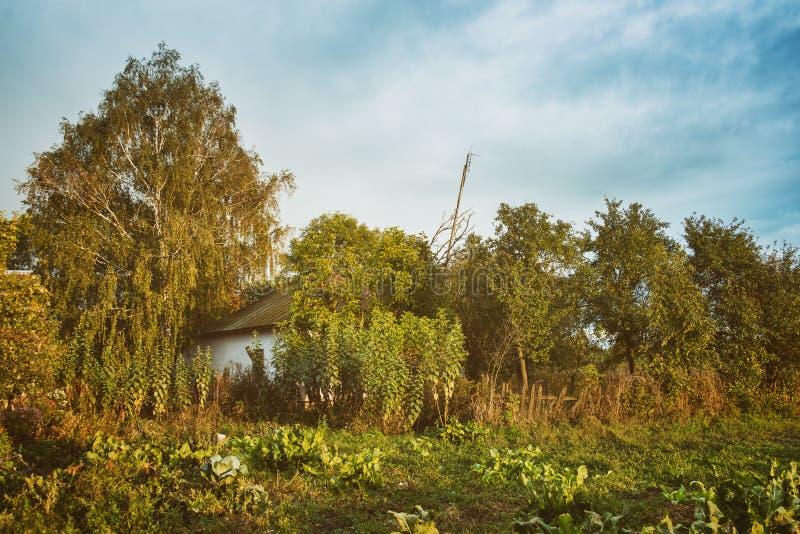 Widok kuchenny ogród zdjęcia stock
