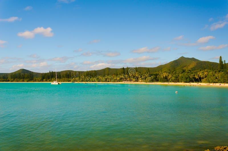 Widok las tropikalny dżungli tropikalna wyspa z sosnami obrazy royalty free