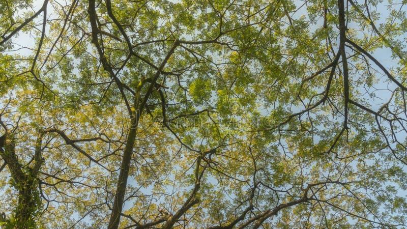 widok liście i gałąź drzewo obraz royalty free