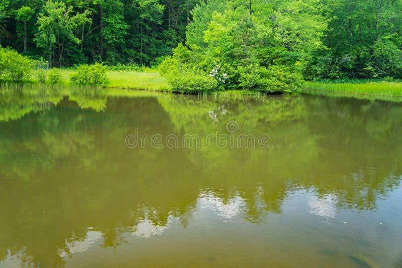 Widok Mały halizna młynu staw obrazy stock