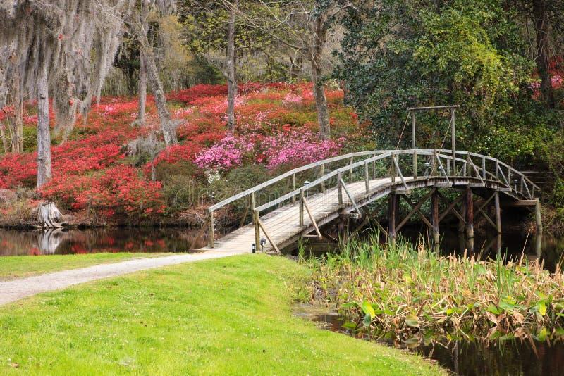 Wiosen azalii kwiat w Południowej plantaci obraz stock