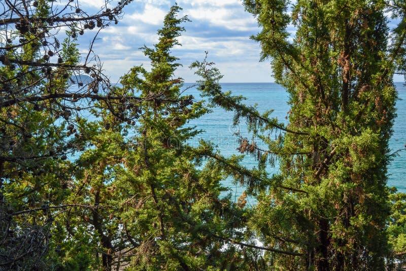 Widok morze od góry, dokąd sosny r Montenegro Budva Riviera Becici obrazy royalty free